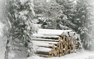 snowy-logs-nature-hd-wallpaper-2560x1600-23357